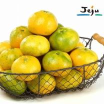 [6월11일 이후 순차출고][제주바람] 새콤달콤 하우스감귤 1.5kg (15~20과) 로얄과