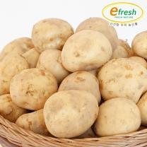 감자 5kg 대 (개당 90~110g 내외)