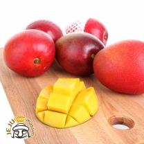 [삼다명품] 제주 애플망고 3kg (7~8과)