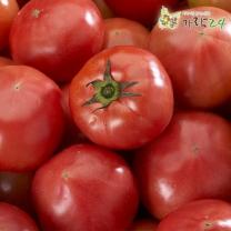 [가락24]당일경매 맛있는 완숙토마토 5kg/2~4번과