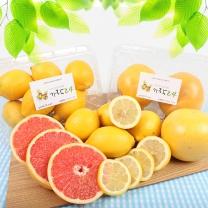 [가락24]자몽 800g 2입 + 레몬 1kg 8입