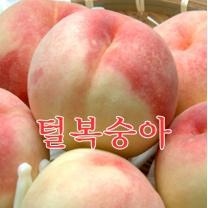 [가락24]하우스 털복숭아(백도황도)1.2kg(4-5과)솔빛