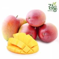 애플망고 5kg 특대과 (12과-14과)