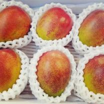 [가락24]달콤한 제주 애플망고 3kg 6-8과/새생명유통