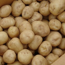 (인빌푸드)삼척 조림용 감자 10kg