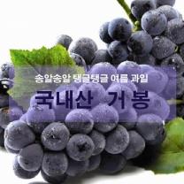 [가락24]]국내산 하우스 거봉포도 2kg / 3송이/삼경