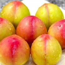 [가락24]]맛있는 햇 자두 5kg/왕특/삼경