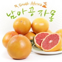 천일농산 남아공산 자몽 6.1kg(18과/340g내외)