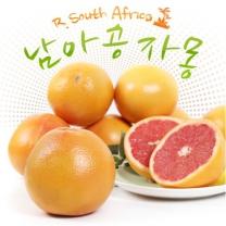 천일농산 남아공산 자몽 5.9kg(21과/280g내외)