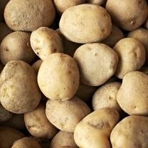 (인빌푸드)어량 감자(소) 10kg