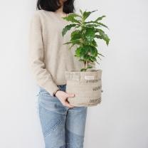 커피팟 나의 첫 번째 애완커피나무 - 커피나무3L