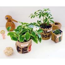 다듬:이 숨쉬는 공기정화식물
