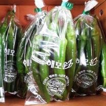 (인빌푸드)강원 삼생마을 오이맛 고추 1kg