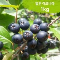 (인빌푸드)함안 아로니아(생과) 1kg