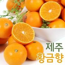 한라농원 제주황금향 4.5kg(12~19)대과/선물용