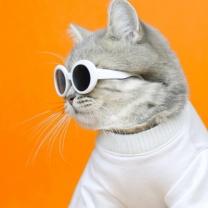 [바보사랑]고양이선글라스 이온펫 냥글라스