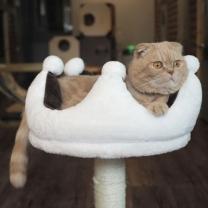 [바보사랑]네꼬모리 고양이 캣타워 크라운타워