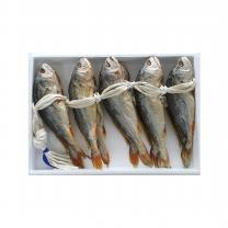 오영곤 보리굴비(마른부세) 대 10미(27~29cm)