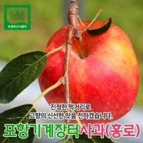 (인빌푸드)9/5출고 기계장터사과(홍로) 5kg(14~16과)