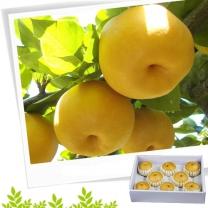 [참다올]나주햇살품은 신고배세트5kg (6-7과)-낱개형박스