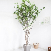 [바보사랑]라인-자작나무 245cm(사방형) 메탈 5-7 [조화]