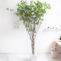 [바보사랑]라인-자작나무 245cm(사방형) 아크릴 5-5 [조화]