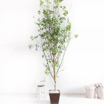 [바보사랑]A자형자작나무320cm 우드 5-5 [조화]