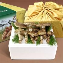 국내산 자연송이 자연산 송이버섯 (등외E) 500g