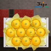 [제주바람] 제주직송 황금향 3kg 대과(6~9과) 선물세트