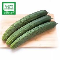 [가락24]친환경 무농약 청오이 3kg/시크릿