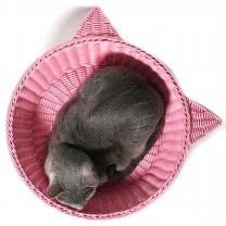 라탄 냥이 바구니 L(핑크)-고양이 하우스 방석 집