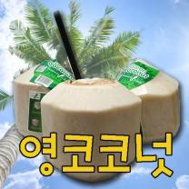 [가락24]영코코넛 4입/개당870g내외/행복