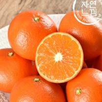 [자연느낌]제주 썬레드 5kg(29-36과)