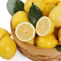 천일농산 칠레산 레몬 2.8kg(20과/대과)