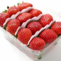 [가락24]덕천강 딸기 500g x 4팩/티에프