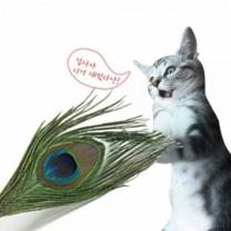 [바보사랑]쥬아펫 ZOOAHPET 고양이 1M 공작깃털 장난감