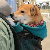 [바보사랑]강아지 백팩 어부바 찰떡가방 Pet bag