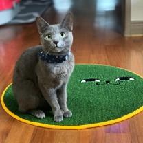 [바보사랑]스크래쳐용 고양이 소환 러그 Green