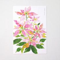 [바보사랑]핑크 포인세티아 엽서
