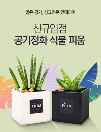 [신규입점]공기정화식물 피움Collection